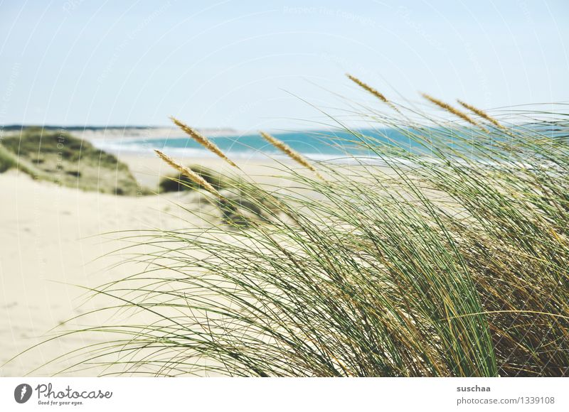 in the dunes .. Ocean Beach Sand Water Sky Sun Dune Grass Coast holiday paradise Vacation & Travel Summer Relaxation