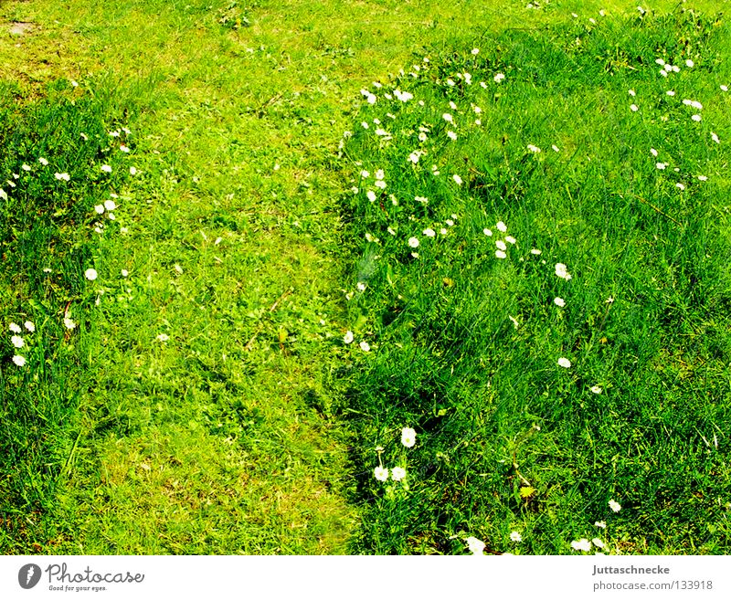 Summer Meadow Grass Spring Garden Lawn Leisure and hobbies Daisy Gardening Diligent Gardener Weekend Mow the lawn