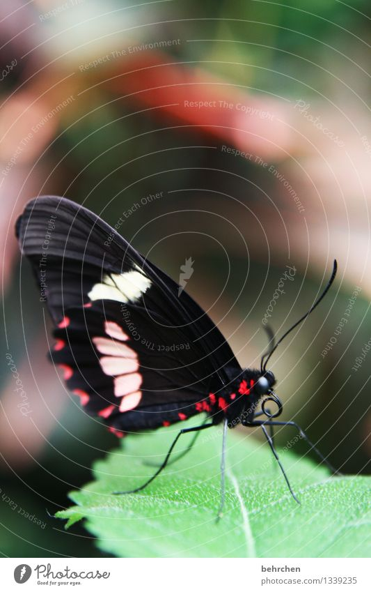 Look at me! Nature Plant Animal Spring Summer Beautiful weather Tree Leaf Garden Park Meadow Wild animal Butterfly Animal face Wing 1 Observe Relaxation Flying