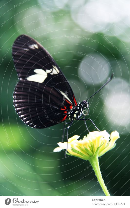 In the spotlight Nature Plant Animal Spring Summer Beautiful weather Flower Leaf Blossom Wild plant Garden Park Meadow Wild animal Butterfly Wing 1 Fragrance
