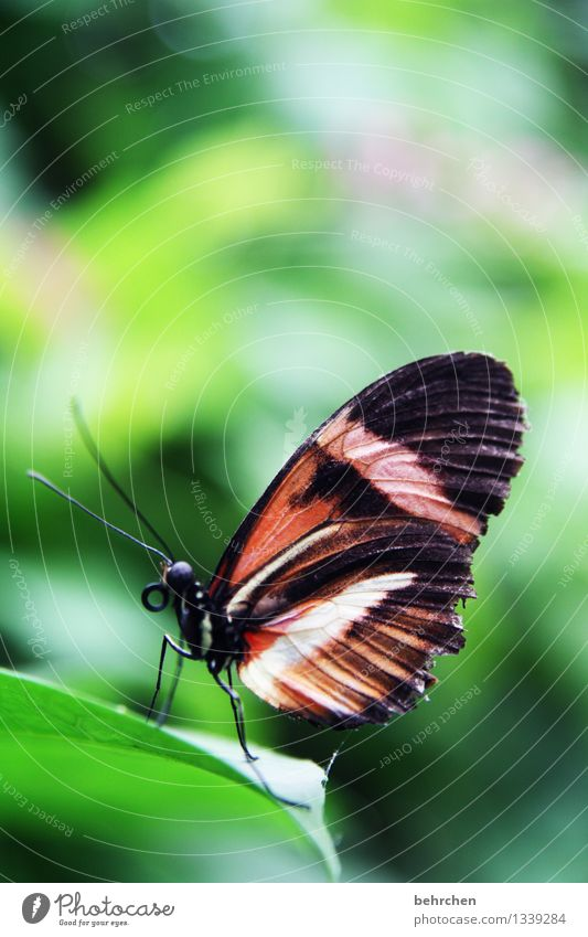 hello, it's me Nature Plant Animal Spring Summer Beautiful weather Tree Leaf Garden Park Meadow Wild animal Butterfly Wing 1 Observe Relaxation Flying To feed