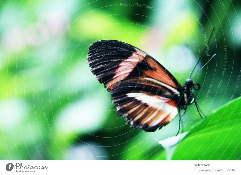 upstairs Nature Plant Animal Summer Beautiful weather Tree Bushes Leaf Garden Park Meadow Wild animal Butterfly Wing 1 Observe Relaxation Flying To feed
