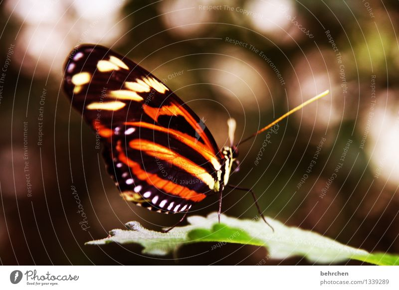 beautiful isabella Nature Plant Animal Tree Leaf Garden Park Meadow Wild animal Butterfly Wing 1 Observe Relaxation Flying To feed Sit Exceptional Exotic