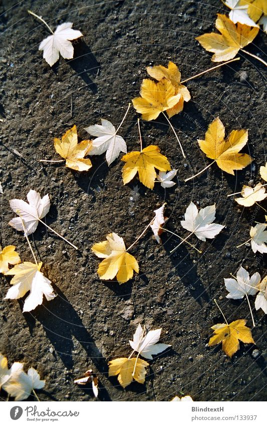 autumn foliage Leaf Autumn Bird's-eye view Distributed Yellow Black White Blown away Grief Transience Earth Sand Floor covering Stone Ground Gold Lanes & trails