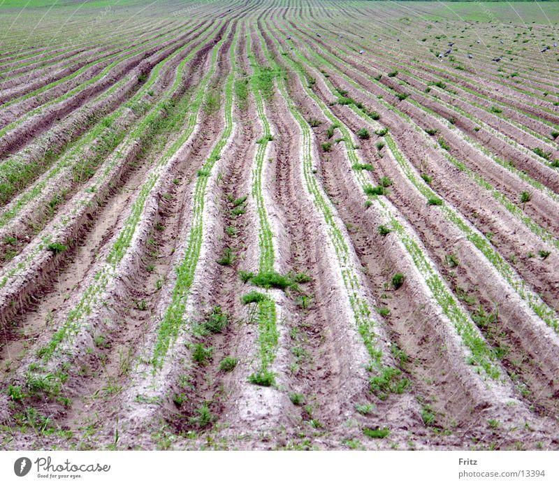 furrow Field Spring Furrow Earth