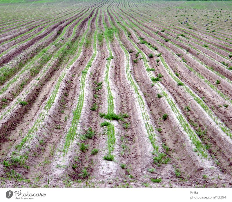 Spring Field Earth Furrow