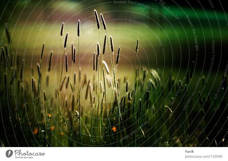 Nature Flower Green Plant Red Black Yellow Colour Dark Autumn Meadow Grass Brown Orange Field