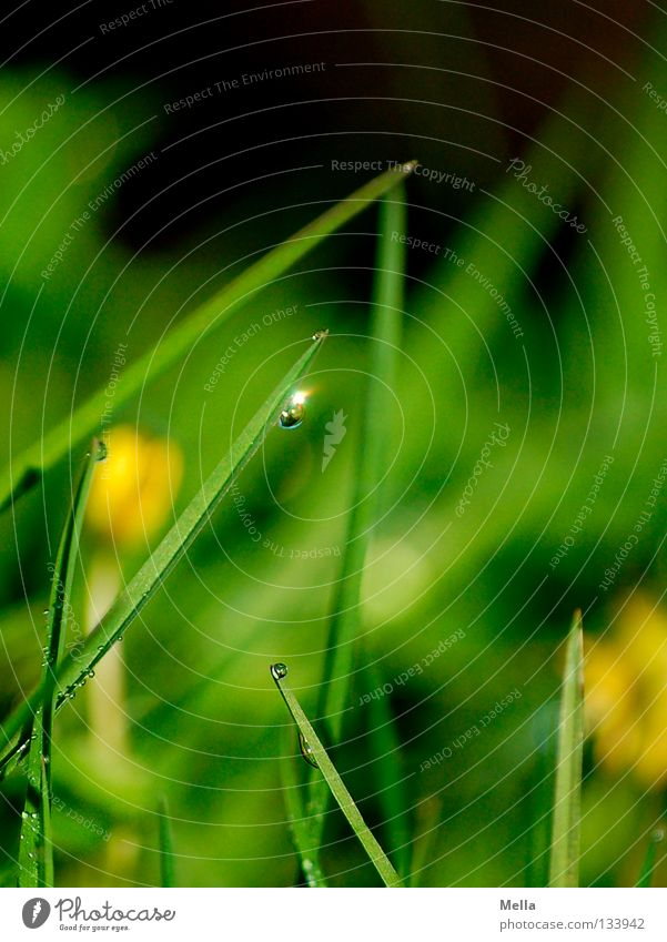 Water Green Meadow Grass Spring Glittering Small Drops of water Rope Perspective Lawn Blade of grass Hang Beautiful weather Fairy tale Novella