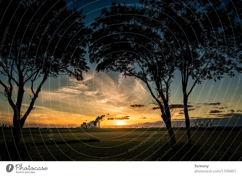 Industrial suburban romanticism Energy industry Coal power station Landscape Plant Sky Clouds Horizon Sun Sunrise Sunset Sunlight Summer Beautiful weather Tree
