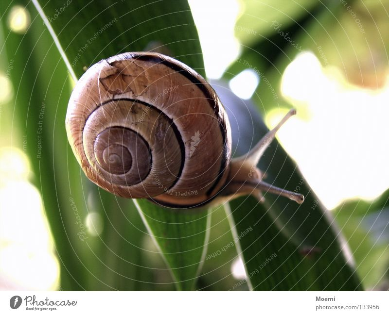 Green Red Leaf Orange Mouth Broken Circle Tracks Concentrate Snail Crawl Feeler Flashy Slimy Snail shell Animal