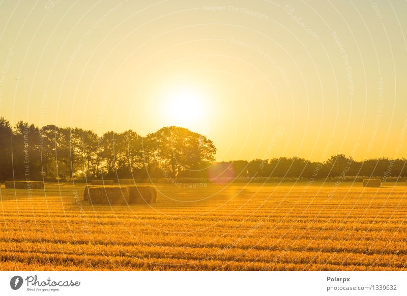 Straw bales in the sunrise Sky Nature Plant Blue Beautiful Summer Landscape Environment Yellow Autumn Meadow Grass Natural Growth Gold Industry