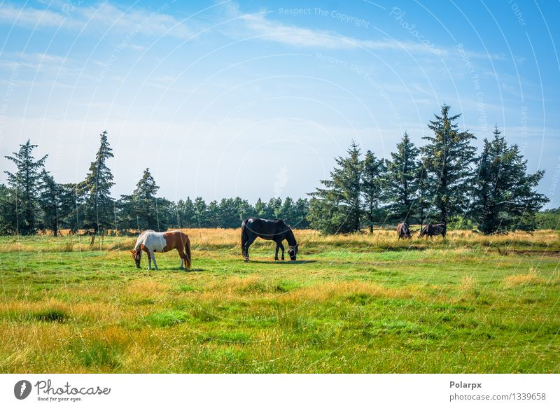 Horses on a field Elegant Face Harmonious Sports Nature Landscape Animal Leather To feed Brown Competition head equestrian Bridle equine equipment stallion