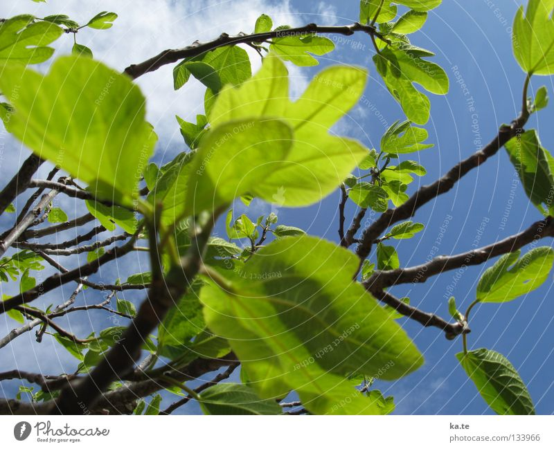 Nature Green Tree Leaf Clouds Life Spring Happy Power Energy industry Growth Fresh Illuminate New Branch Delicate