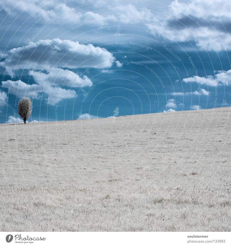 Sky Nature Blue White Tree Clouds Loneliness Calm Far-off places Relaxation Landscape Meadow Snow Wood Grass Exceptional