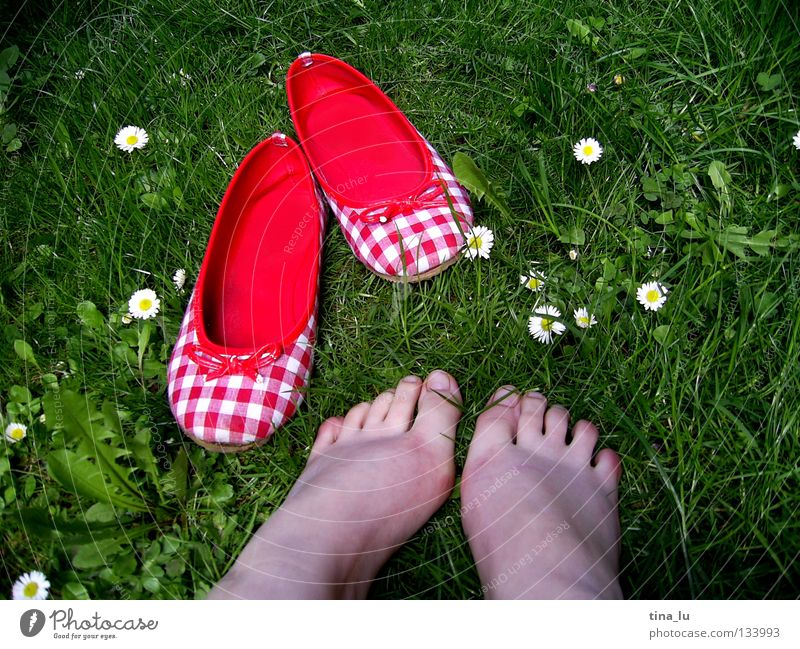 spring shoe Spring Fresh Meadow Grass Green Daisy Grass green Flower Footwear Red Checkered Summer Summery White Toes Barefoot Blade of grass Dandelion