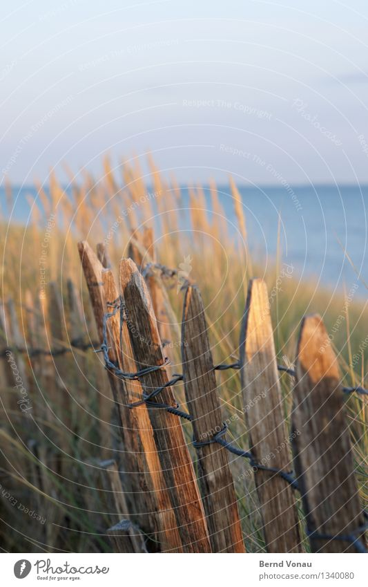 fencing Vacation & Travel Tourism Freedom Camping Summer Summer vacation Beach Ocean Island Blue Brown Yellow Fence Wood Simple Wire Dune Sand Beach dune