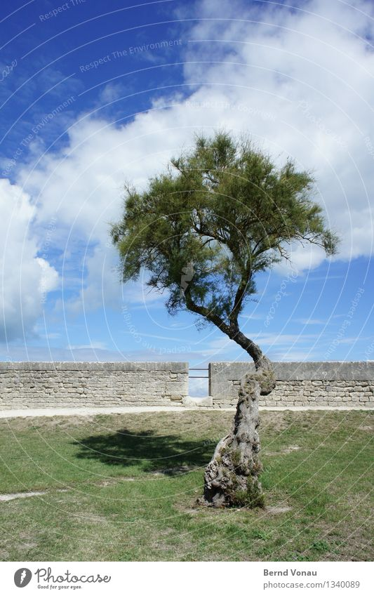little trees Environment Nature Sky Clouds Sunlight Summer Plant Tree Grass Wall (barrier) Wall (building) Esthetic Vacation & Travel France La Rochelle Quaint
