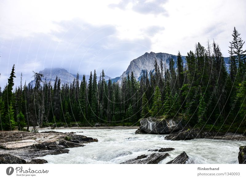 nature. Trip Adventure Far-off places Freedom Mountain Hiking Aquatics Water Fir tree Forest Peak Brook River Yoho National Park Canada British Columbia