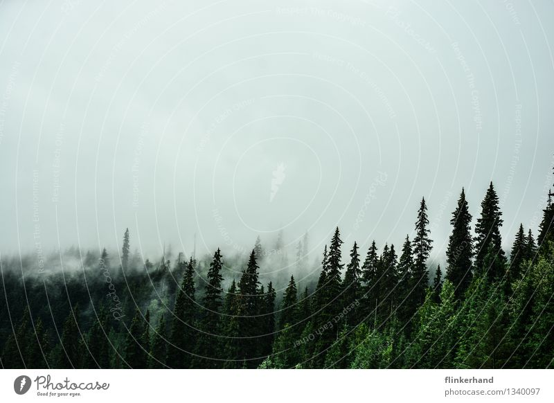 Nature Plant Landscape Dark Forest Mountain Fog Hiking Climate Mountaineering Canada Bad weather North America British Columbia Mirkwood