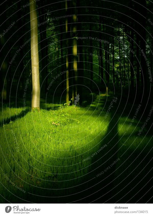 green Forest Green Spring Summer Dye Colour Paints and varnish Shadow Light and shadow Tree trunk Grass Meadow To go for a walk Dog Vanished Landscape