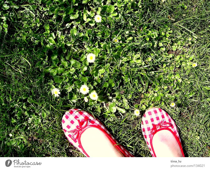 spring shoe I Spring Fresh Meadow Grass Green Daisy Grass green Flower Footwear Red Checkered Summer Summery White Toes Barefoot Blade of grass Dandelion