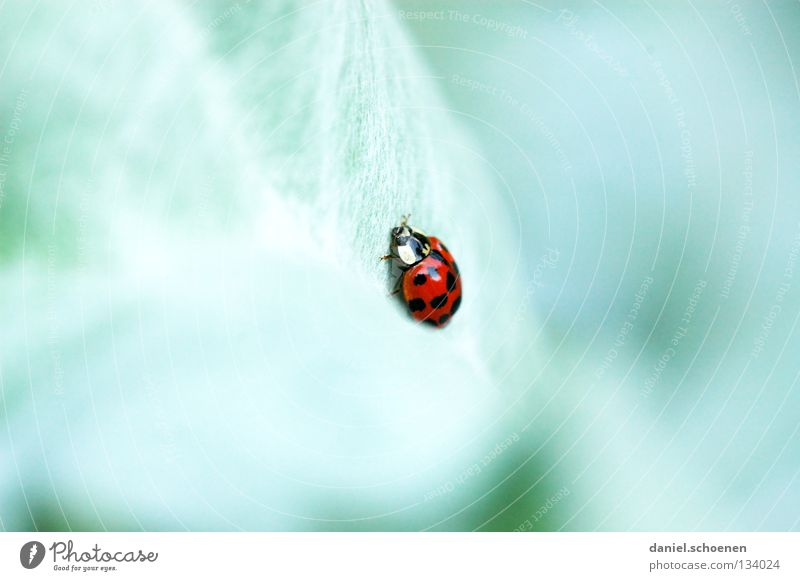Green Red Summer Colour Spring Happy Ladybird Crawl Slowly