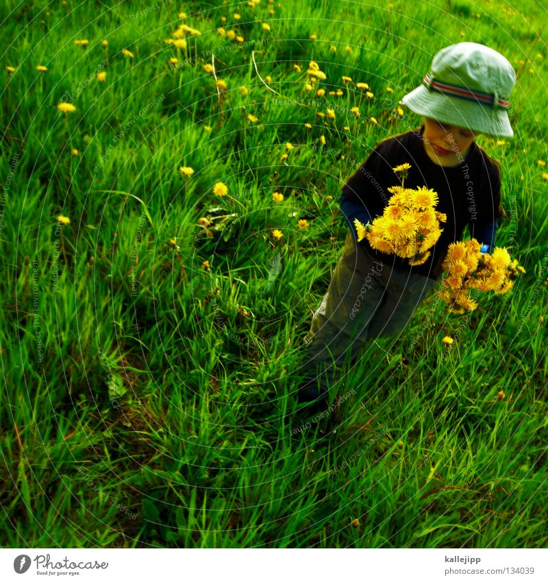 Human being Child Man Old Summer Flower Life Meadow Playing Grass Spring Laughter Small Jump Air Going