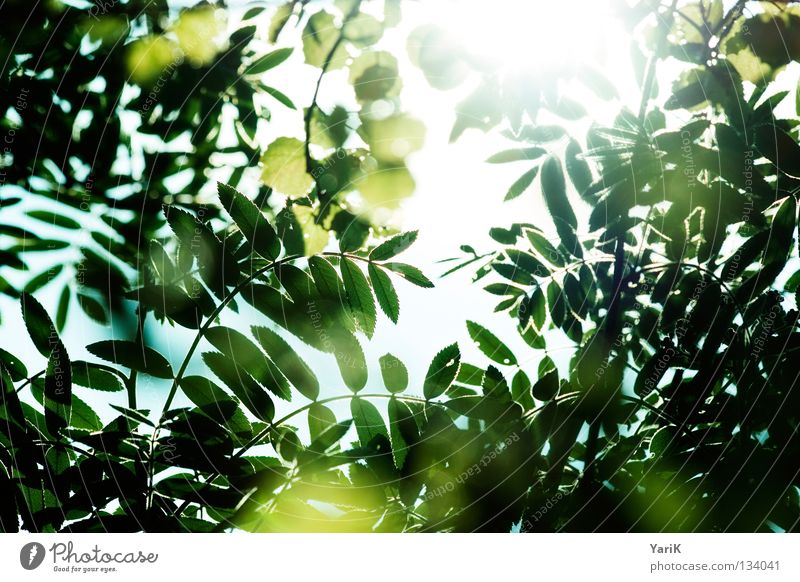 review Leaf Bushes Tree Green Yellow Greeny-yellow Summer Spring Sun Light Reflection Sunbeam Glow Transparent Lighting Illuminate Back-light Physics
