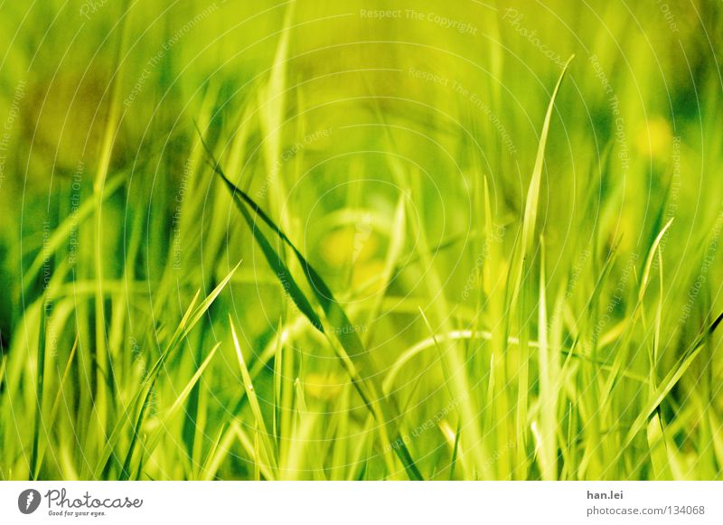 Brilliant Green Style Summer Nature Plant Earth Spring Grass Meadow Field Hang Growth Blade of grass Muddled Damp Stalk Depth of field Floor covering