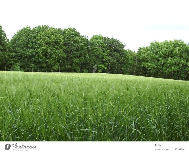 so-viel-green Green Field Forest Summer