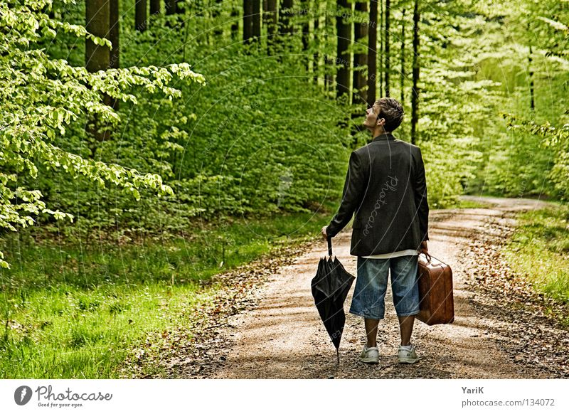 Man Old Green Tree Calm Loneliness Forest Above Stone Bright Brown Lighting Going Hiking Search Crazy