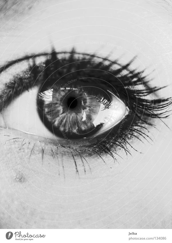 eyes open. Face Make-up Mascara Human being Woman Adults Eyes Gray Eyelash Wearing makeup black white B/W faces lashes Black & white photo