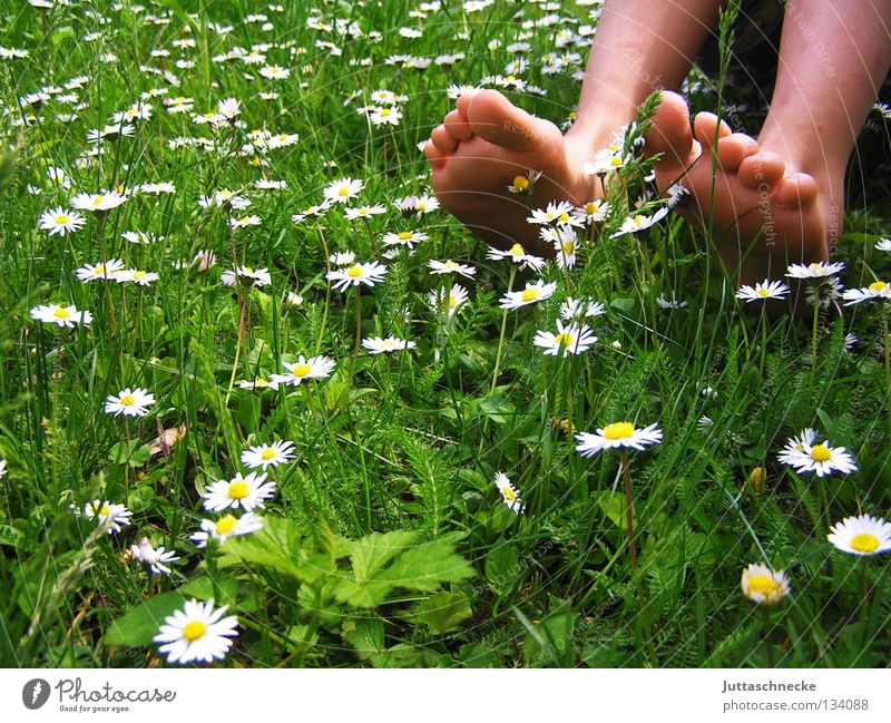 And it was summer Toes Calf Tibia Barefoot Healthy Daisy Meadow Flower meadow Grass Children's foot Good morning Happiness Summer Spring Blossom Green White