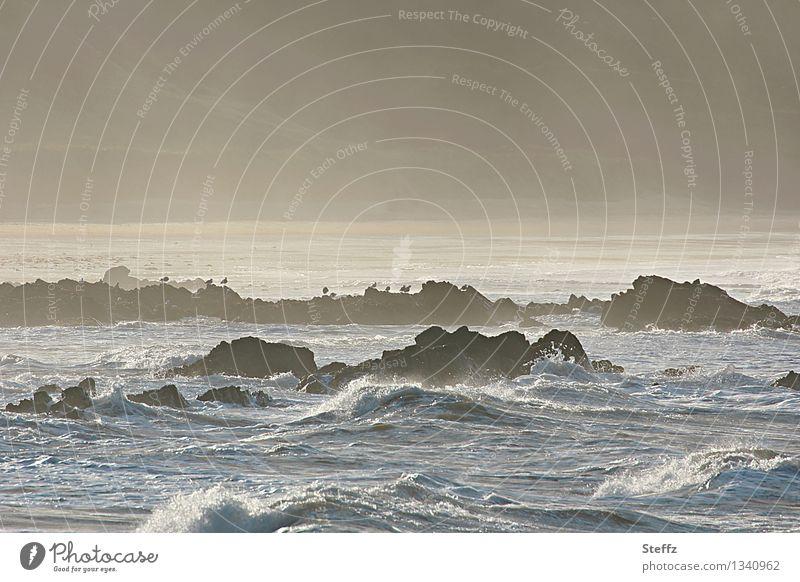 the light of the Scottish Bight North Sea Maritime Nordic Nordic nature Illuminating Water Fog Waves coast Bay Ocean Beach Great Britain Scotland