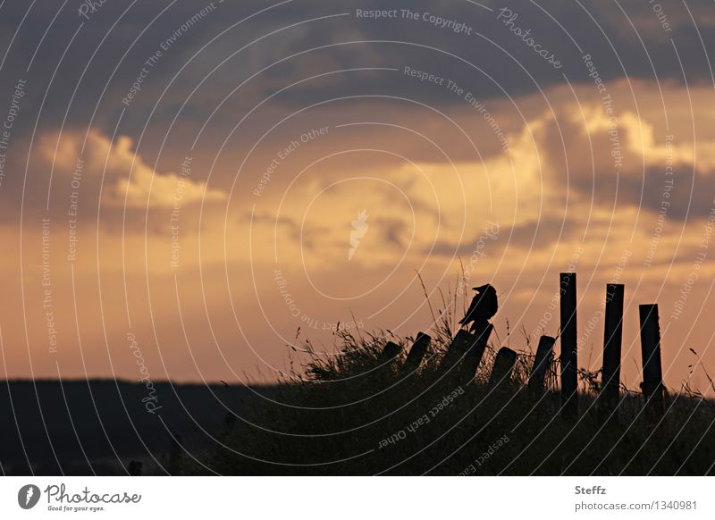 Sky Nature Landscape Loneliness Calm Dark Moody Bird Field Gloomy Mysterious Fence Creepy Nostalgia Hallowe'en Eerie