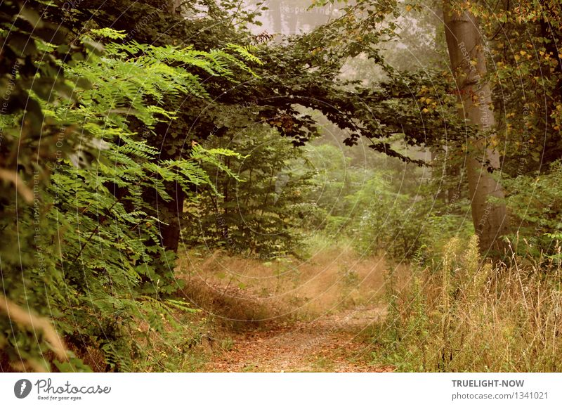 Nature Plant Green Summer Tree Relaxation Loneliness Landscape Leaf Calm Forest Autumn Grass Lanes & trails Natural Gray
