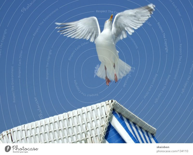 Blue White Vacation & Travel Ocean Summer Beach Relaxation Warmth Coast Germany Work and employment Bird Leisure and hobbies Flying Beginning Free