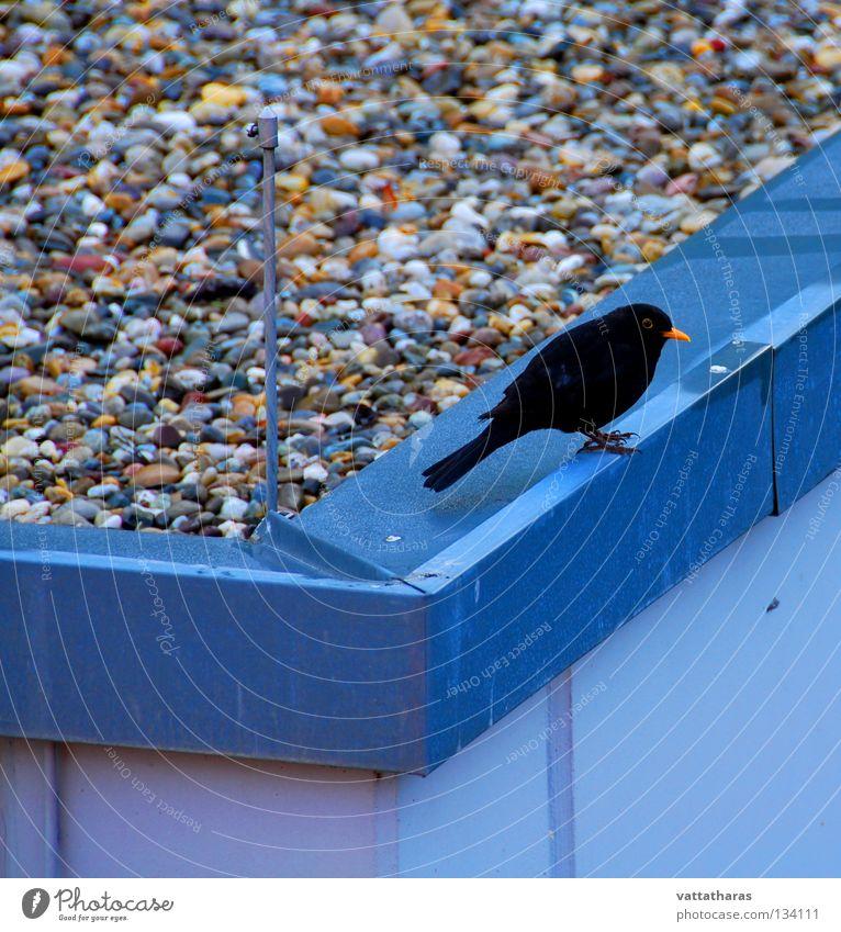 Nature Jump Bird Song Blackbird