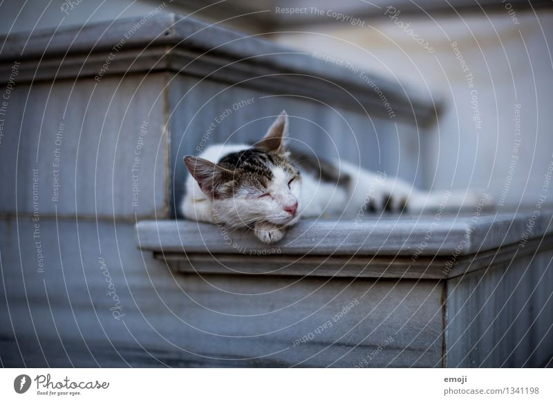 Cat Calm Animal Lie Sleep Break Pelt Pet Animal face