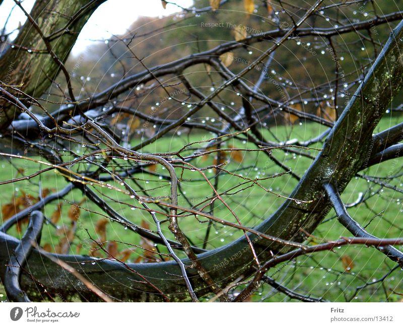 rain Autumn Bad weather Rain Drops of water