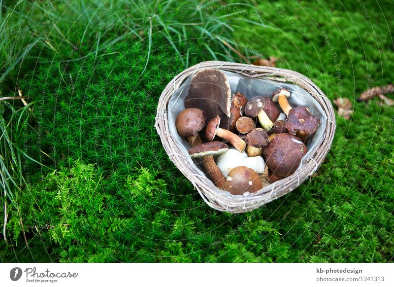 Collected mushrooms in a basket in the forest Food Mushroom picker Organic produce Healthy Healthy Eating Nature Forest Hiking landscape vegetables harvest