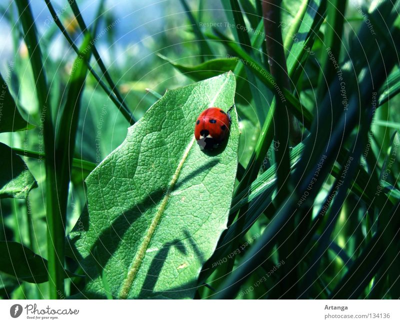 sunbathe Spring Ladybird Green Grass Red Leaf