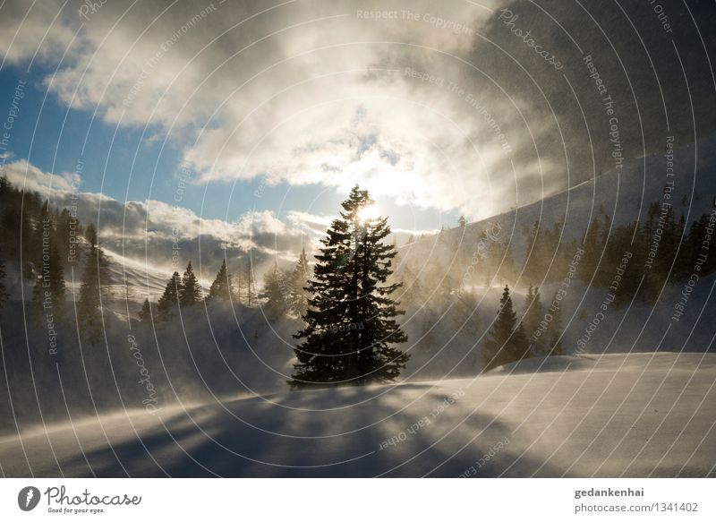 a beautiful storm Environment Nature Landscape Sky Sun Sunlight Winter Gale Ice Frost Snow Tree Alps Snowcapped peak Happy Cool (slang) Power Brave Eternity
