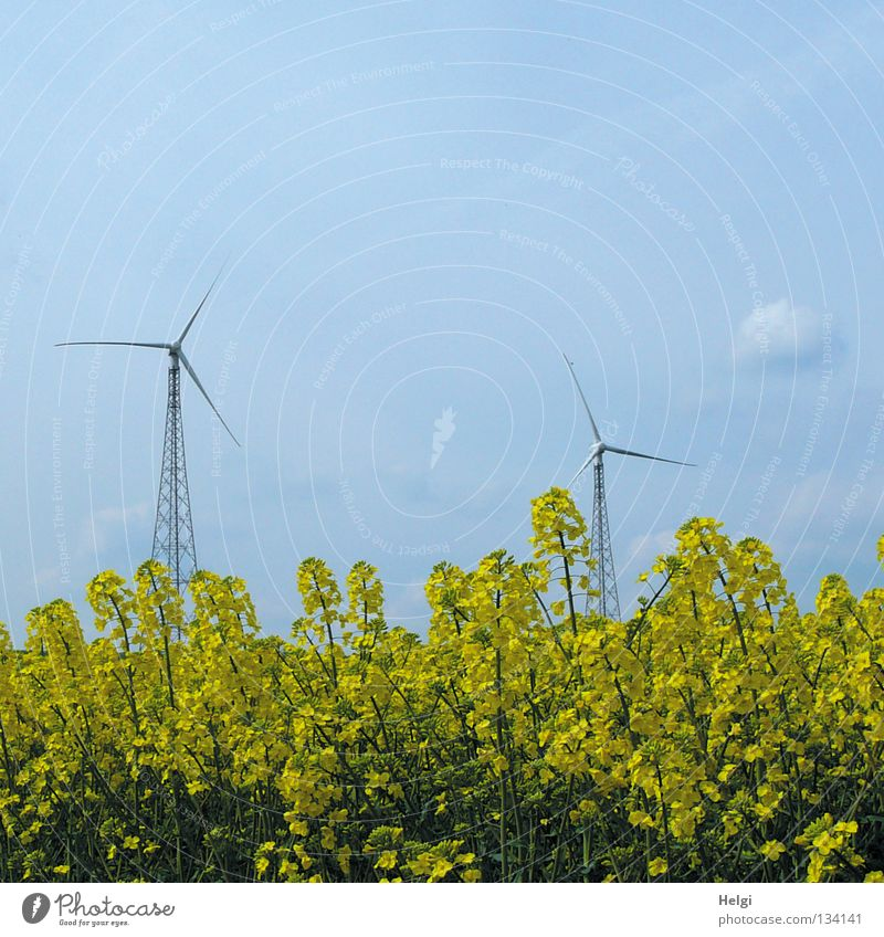two wind turbines stand behind yellow flowering rape in front of a blue sky Wind energy plant Aspire Length Across 2 Towering Large Rotate Electricity