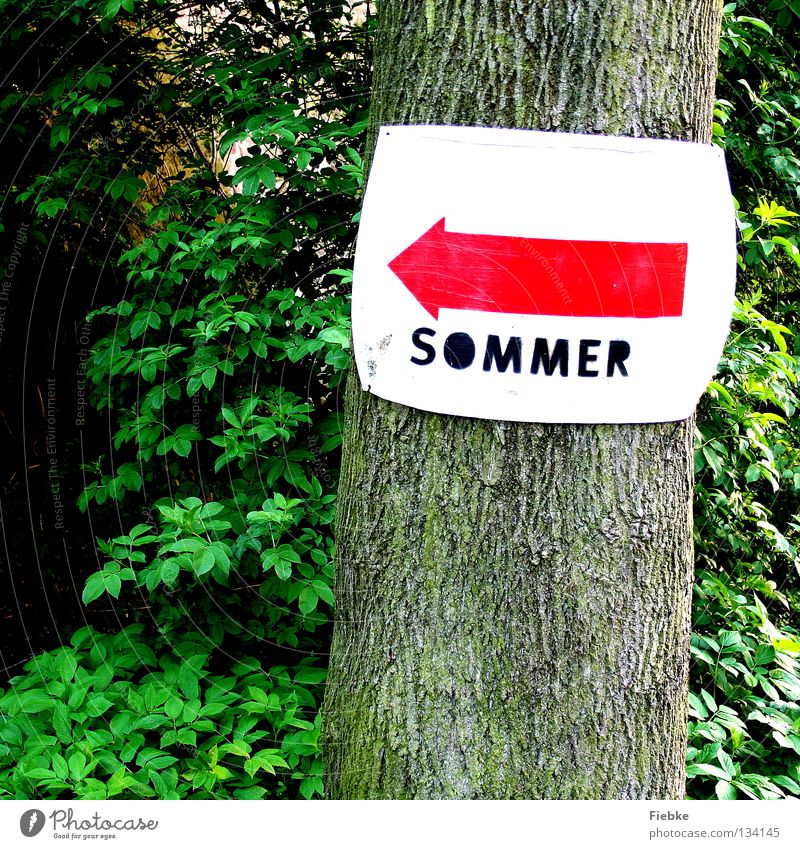 That way! Summer Arrow Signs and labeling Tree Forest Bushes Turn off Lanes & trails Road marking Roadside calvery Indicate Leaf Navigation Tree bark