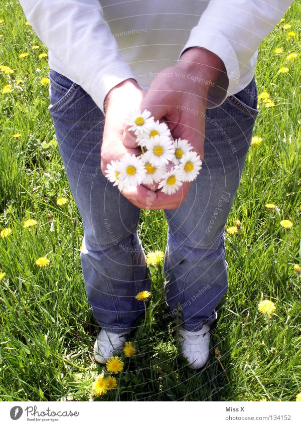 Youth (Young adults) Man Green Summer Flower Hand 18 - 30 years Adults Love Spring Meadow Grass Friendship Birthday Gift Romance