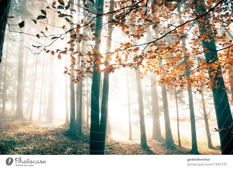 red october Environment Nature Landscape Animal Sunrise Sunset Sunlight Autumn Beautiful weather Fog Tree Forest Contentment Romance Freedom Peace Purity