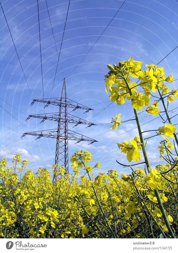 lots of energy Sky White Blue Clouds Yellow Weather Industry Energy industry Electricity Agriculture Steel Appetite Oil Electricity pylon Wire