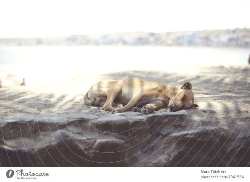 Dog Summer Tree Ocean Landscape Calm Animal Beach Environment Time Moody Sand Lie Dream Contentment Leisure and hobbies