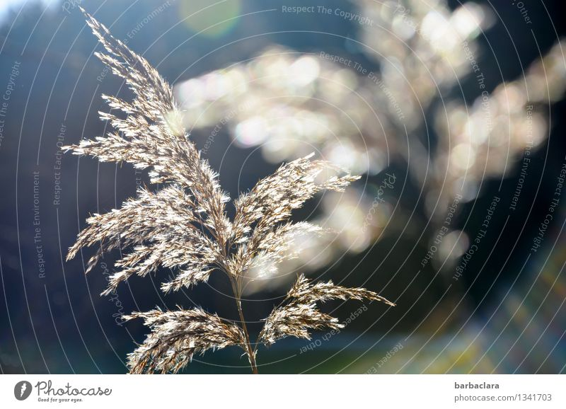 Nature Plant Blue Water White Sun Environment Grass Happy Moody Bright Illuminate Warm-heartedness Lakeside Senses